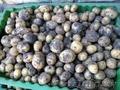 Картофель молодой (некондиция) на корм животным. 0, 15 р/кг